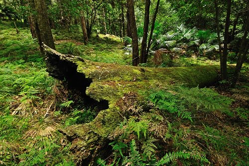 Preserving Australia's Native Forests