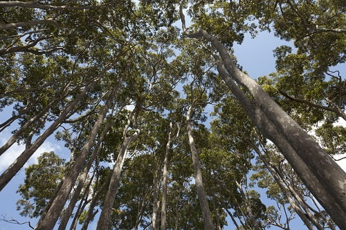 Timber Suppliers in Brisbane: All About Ironbark