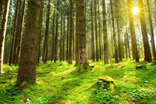 Do We Need Regional Forest Hubs?