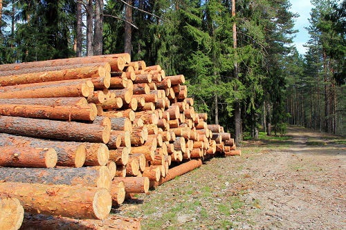 Uses for Pine Logs