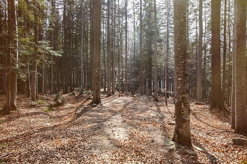 The Victoria Forest Resource Report and What it Means to You