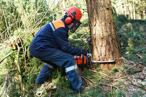 Giving Consumers a Say in the Timber Industry