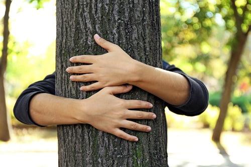 Megatrends in Australian Timber: Part 5