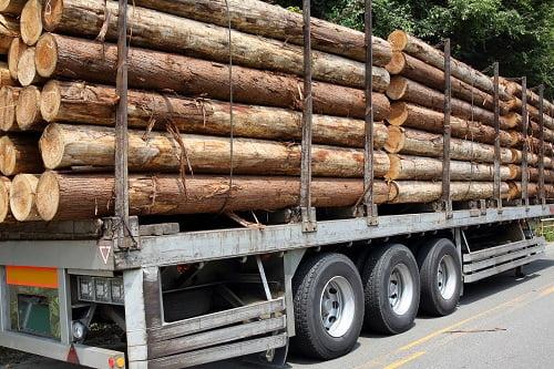 Megatrends in Australian Timber: Part 1